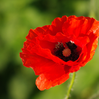 Reflections on remembrance in troubling times